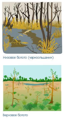 Виды болот