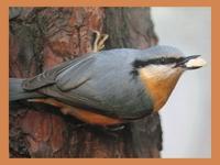 Заботливая птаха